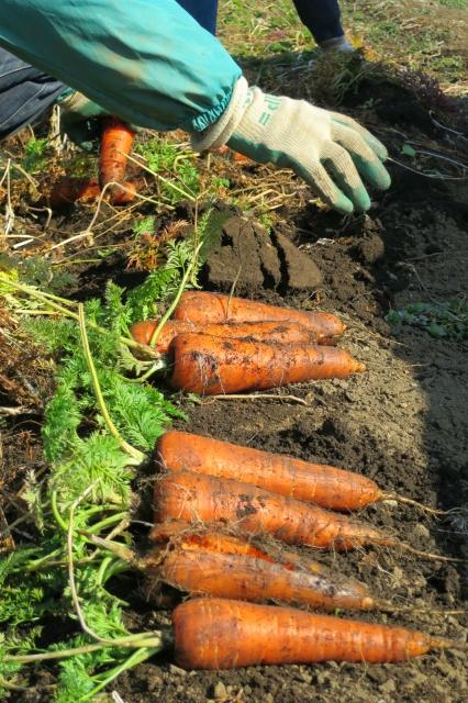 農作業イメージ写真