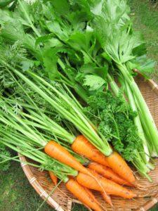様々な野菜イメージ写真