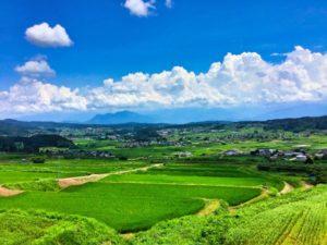 真夏の田園風景