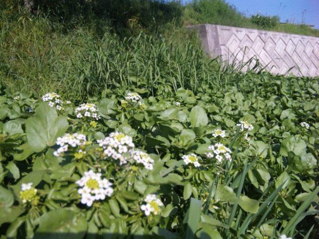 多様な幸(さち)が採れる菜園づくり