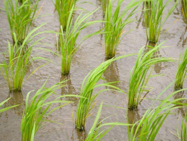 働き方改革と半農生活の可能性