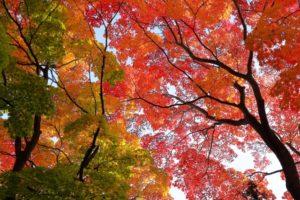 紅葉イメージ画像