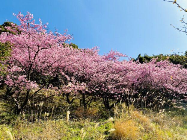 桜イメージ画像