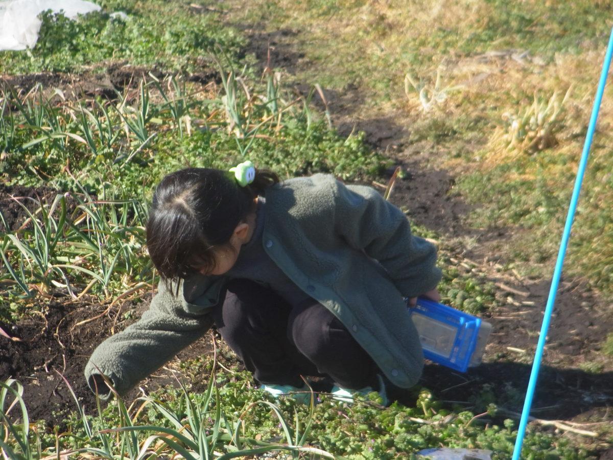 草むらの中にテントウムシがたくさんいたよ。